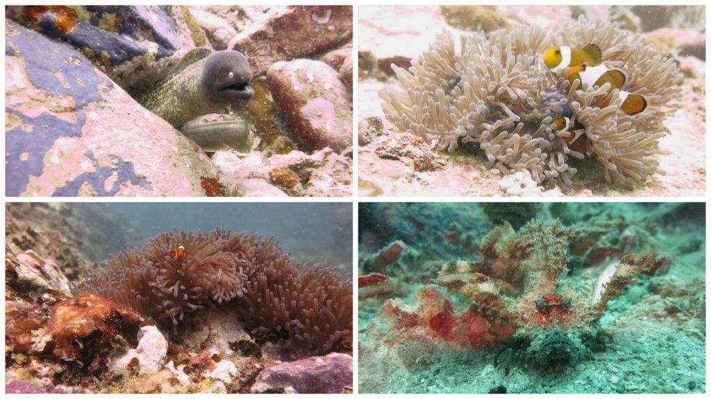 buceo perhentian mix