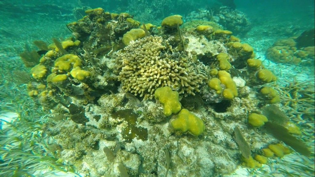 3.coral4_