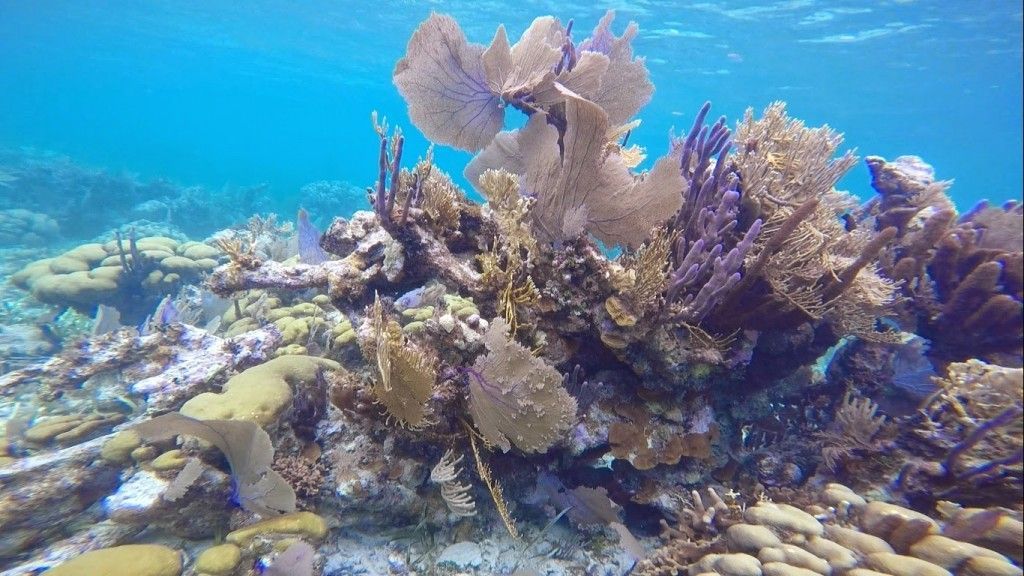 3.coral5_