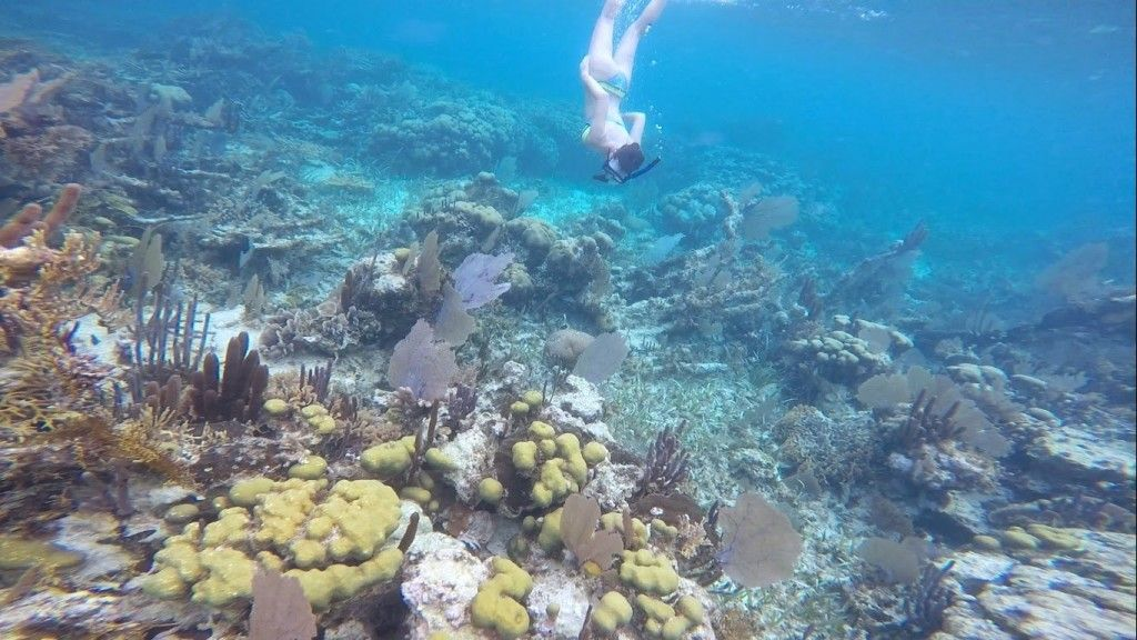 3.coral6_